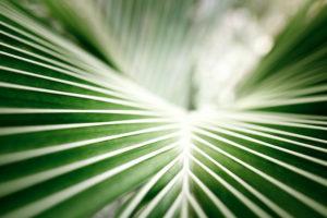 高島康司の進化への扉/第23回 新型コロナウイルスに関する「プレヤーレンからの情報」と「アガスティアの葉とパーカーの予言」