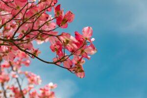 いけだ笑みの「空を仰げば」〈7〉 4月の「金星・火星期間」は恋とあらゆる関係性が上り調子!