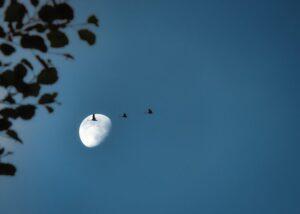 いけだ笑みの「空を仰げば」〈12〉 9月は中秋の名月にちなんで生まれ日の「月の満ち欠け」に注目